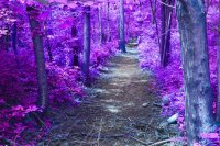 Purple Pathway-Art
