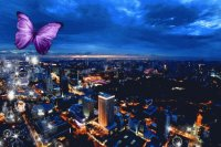 Purple Butterfly Over City