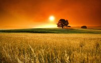 sunrise and field with tree