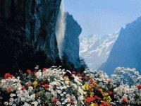 waterfall and mountain flowers