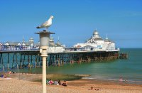 Eastbourne Pier and Gull