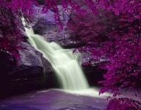 Waterfall in Purple Splendor