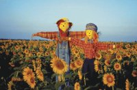 Scarecrows in a field in Kansas