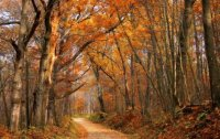 side road in autumn