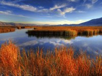 autumn marsh