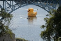 Rubber Ducky Pittsburgh