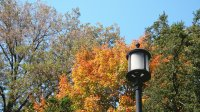 fall light post