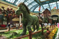 The Bellagio Conservatory, Las Vegas
