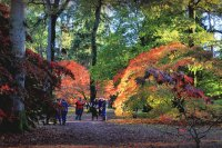 Westonbirt Autumn Colour