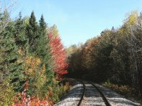 Fall colours along train tracks