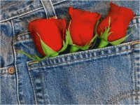 Jeans and Roses