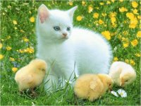 Young Cat with Chicken