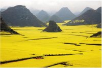 Campos de Canola - China