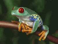 Beautiful Frog