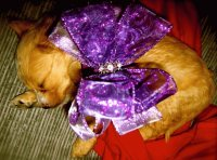 Christmas Puppy with Big Purple Bow