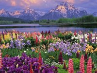 Flowerfull Background  Colorado  USA