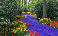 Blue Flowers Path