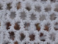 Hoar frost crystals on fence