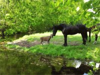 Horse and Roe Deer  Hilversum  the Netherlands