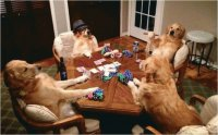Dogs playing card