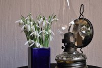 Still life  Snowdrops and Oil Lamp