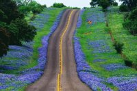 Bluebonnets on Sides of Country Road