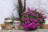 Flowers in Loutro  Crete   Greece