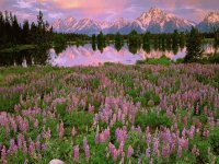 Pilgrim Creek  Grand Teton  Wyoming  USA