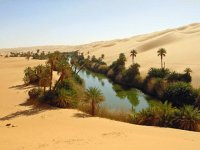 Oasis in the Sahara