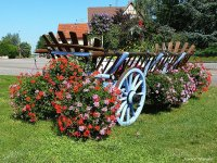 Flowers on a Cart  France