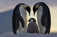 Proud Parents  Antartica