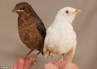 White and Brown Wackybirds