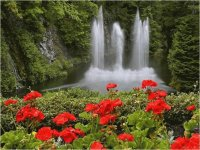 Waterfall and Flowers