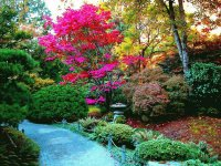 Colourful Garden