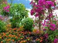 Flowers along Lake Geneva