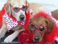 Valentine Dogs at the Beach