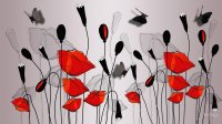 Poppies, shadow and Butterflies