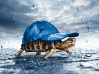 Tortoise in the Rain