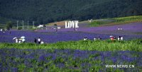 ♥Love in the Lavender Fields-Shenyang, China♥
