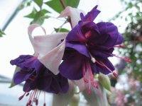 Vibrant Deep Purple Fuchsia