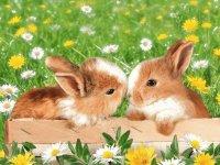 conejoss