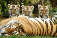 madres y sus crías