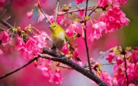 Bird in Springtime
