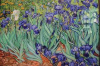 Irises - Getty Centre Los Angeles