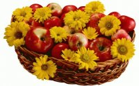 Apples Yellow Daisies