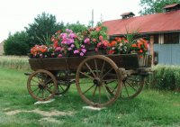 Flower Cart Alsace France