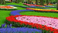 Flower Garden the Keukenhof Lisse the Netherlands