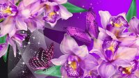 Purple Orchid and Butterflies