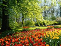 Beautiful Flower Garden  the Keukenhof