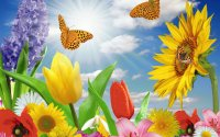 Spring with Butterflies